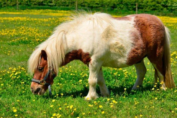 alpengasthof-dortmunder-huette-familien-galerie-sommer-pony