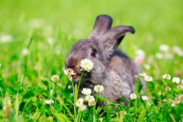 alpengasthof-dortmunder-huette-familien-galerie-sommer-wiese-kaninchen