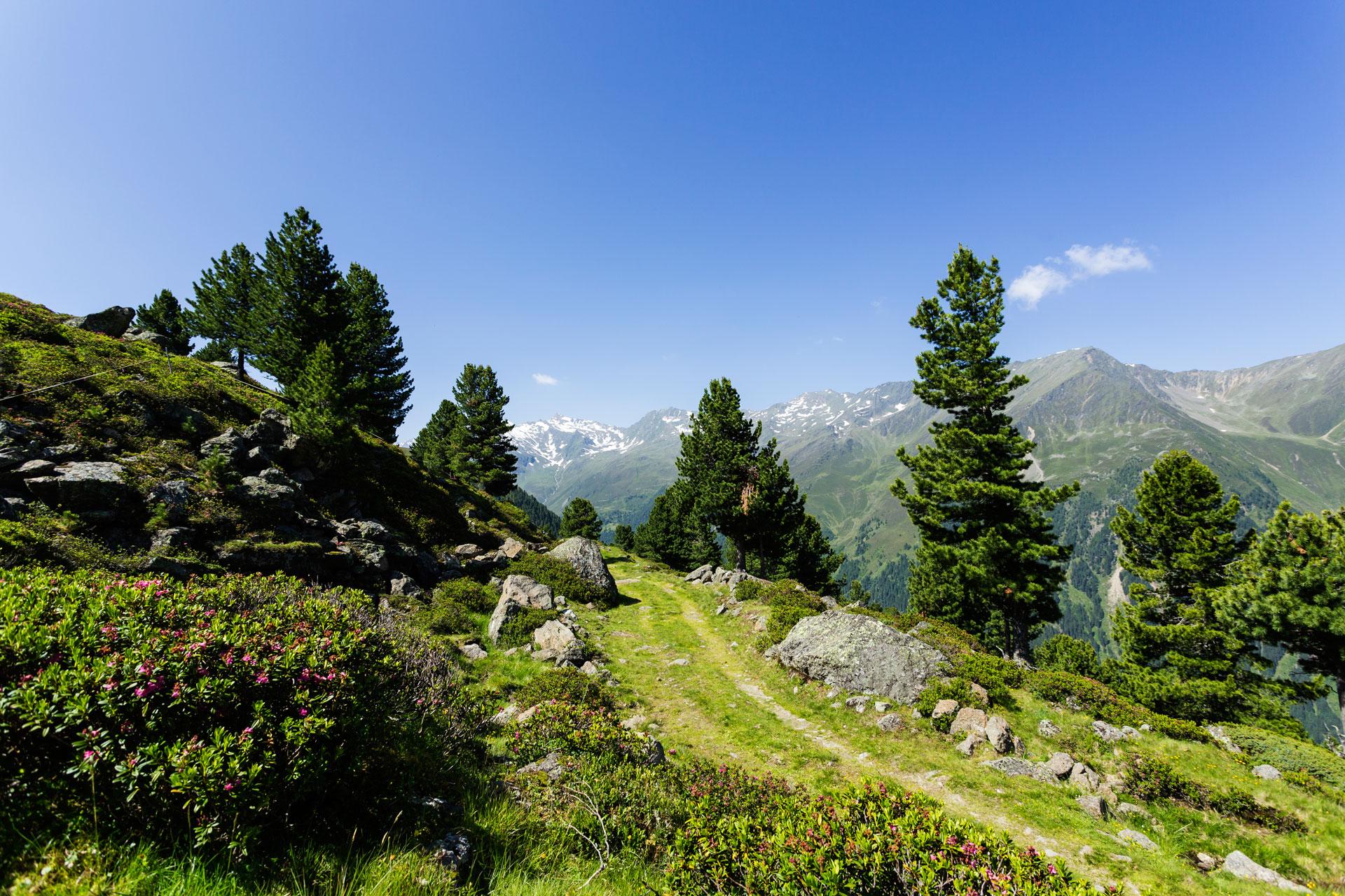 alpengasthof-dortmunder-huette-sommer-galerie-landschaft